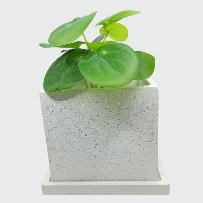 Maceta de cemento blanco Cuadrada