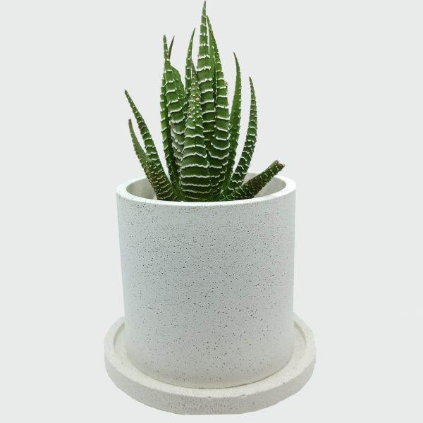 Macetero de cemento blanco cilíndrico