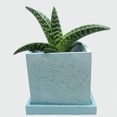 Venta de macetas de cemento cuadradas a buen precio